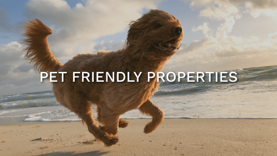 st simons pet friendly vacation rentals